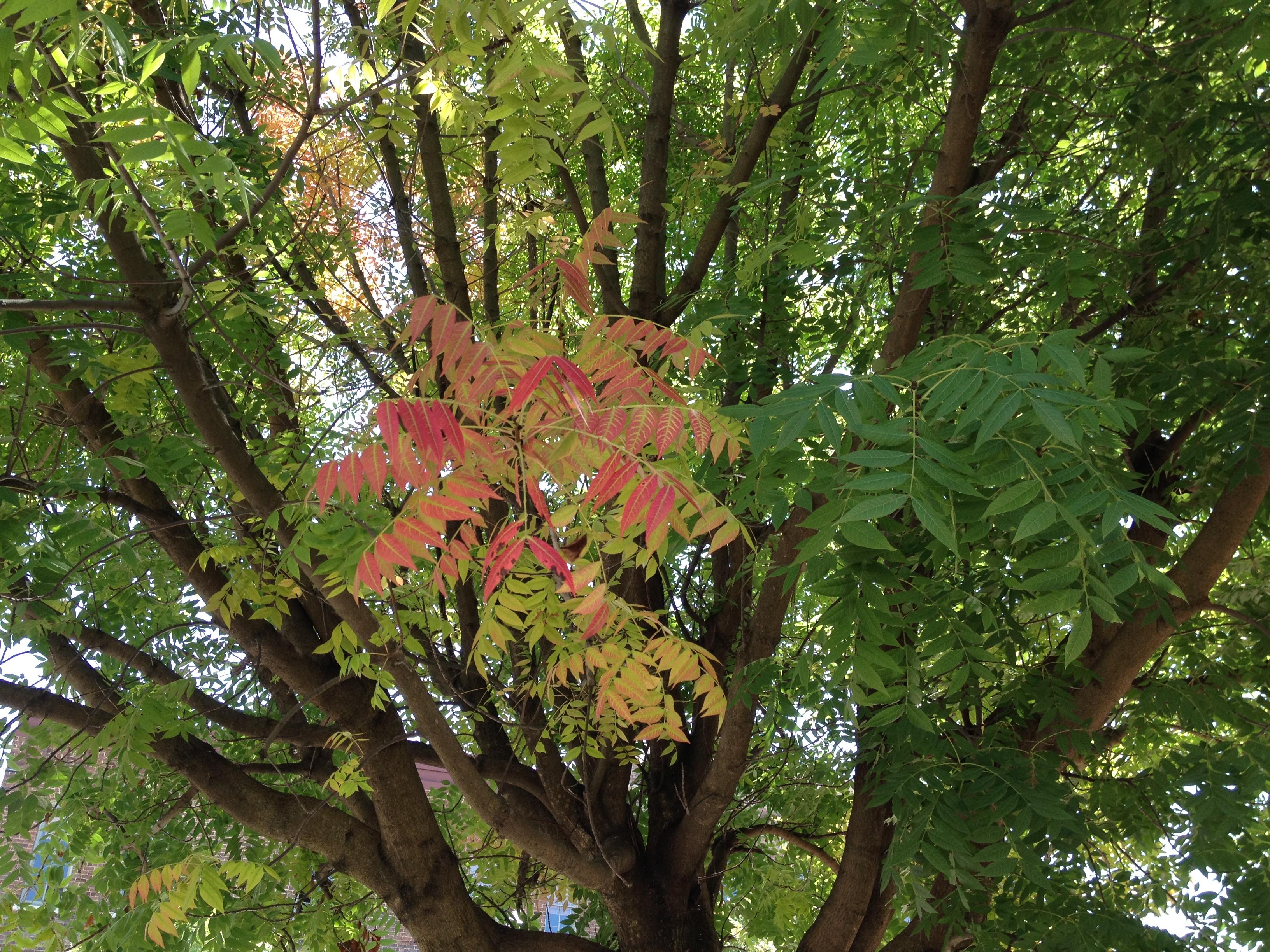 fall, harvest, foliage, Stephen King, Halloween, horror, pumpkin, fall in Birmingham