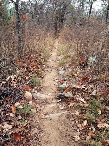 Tranquility Lake 50K, Southeastern Trail Series, Southeast Trail Runs, David Tosch, ultra running, trail running, Oak Mountain State Park, 50K training, Birmingham Ultra Trail Society